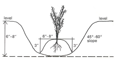 "Drawing of ""W"" Furrow for planting"