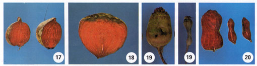 Beet Root Rot Photo Collage #5
