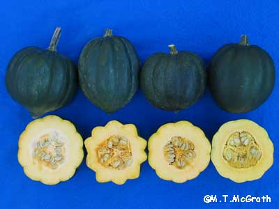 Fruit of four different winter squash varieties with Powdery midlew