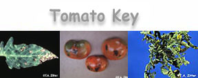tomato key button