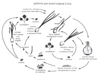 Botrytis Life Cycle