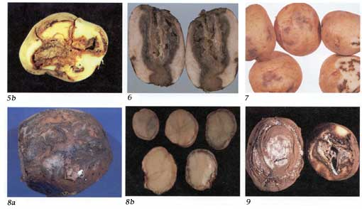 Potato Diseases Photo Collage 2