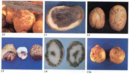 Potato Diseases Photo Collage 3