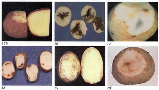 Potato Diseases Photo Collage# 4